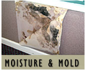 Florida Construction Moisture and Mold Issues